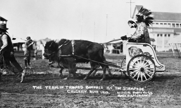 Buffalo team and cart at Calgary Exhibition and Stampede, Calgary, Alberta | Photo by Marcelle | September 1912 | Glenbow Archives NA-335-74